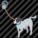 dog, lead, leash, pet, training, walking