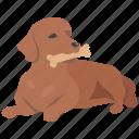 biscuit, bone, chew, dog, pet, toy