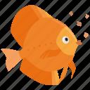 feed, feeding, fish, fish food, flakes, food