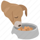bowl, dish, dog, dog bowl, dog food, food