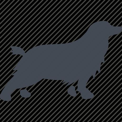 animal, dog, pet, pets icon