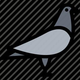 animals, dove, fauna, pet store, pets, vet icon