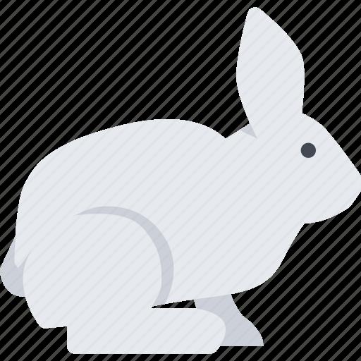animal, pet, pet shop, rabbit, vet, zoo icon
