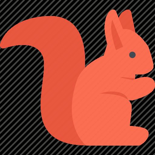 animal, pet, pet shop, squirrel, vet, zoo icon