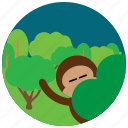 forest, jungle, locations, monkey, places, trees