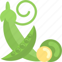 beans, food, pea, plant icon