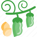 beans, food, peas, plant icon
