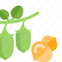 beans, food, peas, plant, sheet icon