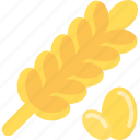 corn, food, plant, wheat icon