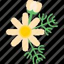 flower, food, greenery, plant icon