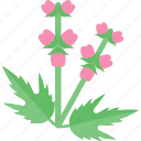 flower, greenery, plant, seed icon
