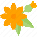 flower, garden, plant, seed icon