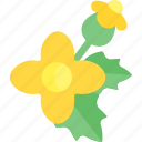 flower, plant, seed, sheet icon