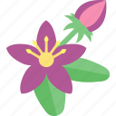 beauty, flowers, plant, seeds icon