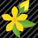 flowers, plant, sheet, stalk icon