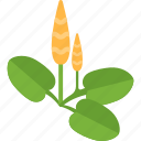 food, garden, plant, seeds icon