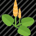 food, garden, plant, seeds