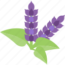 flower, plant, purple, seed icon