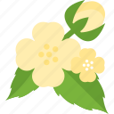 beauty, flower, plant, seed