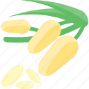 beans, plant, seeds, sheet icon