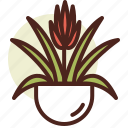 bromeliad, decor, green, nature icon