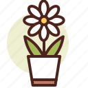 daisy, decor, green, nature icon