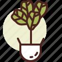 decor, fiddle, fig, green, leaf, nature icon