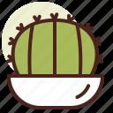 barrel, cactus, decor, golden, green, nature