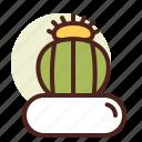 cactus, decor, green, melocactus, nature icon