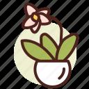 decor, green, nature, orchid icon