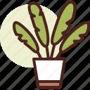 decor, green, leaf, nature, palm, plant