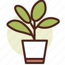 decor, green, nature, plant, rubber