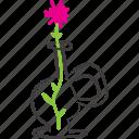 decoration, flower, pink, vase