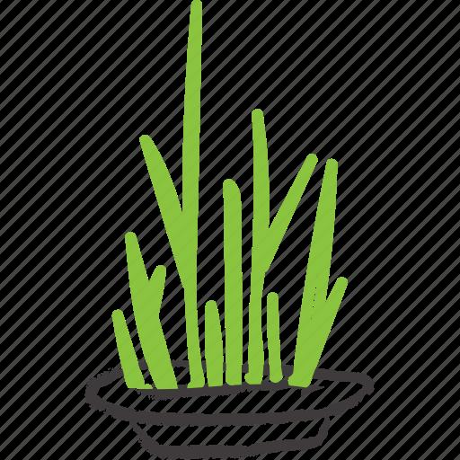 flower, garden, plant, plate, succulent icon