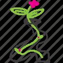 flower, organic, pink flower, vase, wavy icon