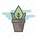 flower, house plant, indoor, leaf, plant, pot icon