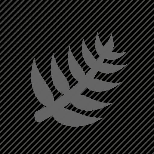 grower, herb, leaf, palm, perennial, plant, tree icon