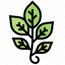 branch, compound, leaves, nature, plant