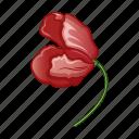 bloom, blossom, cartoon, flower, poppy, red, wild icon