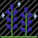 flower, botanical, lavender, plant, nature