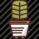 cactus, flower, plant, agriculture, garden, green, leaf