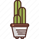 cactus, flower, plant, forest, leaf, nature, tree