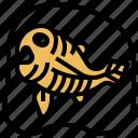 fish, fossil, paleontology, skeleton, stone