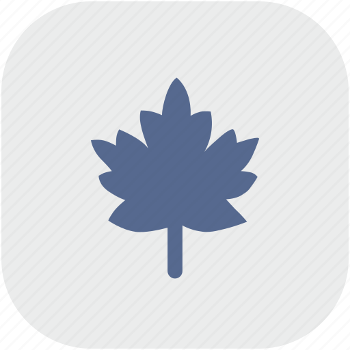 canada, leaf, nature, rounded, square icon