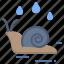 snail, rainy, gastropod, moisture, wet icon