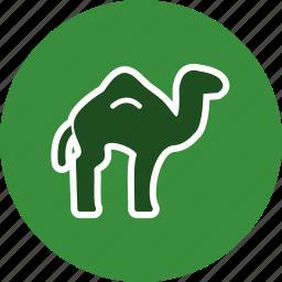 animal, arabian, camel, sacrifice icon