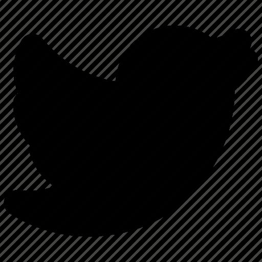 internet, media, network, online, social, twitter, web icon