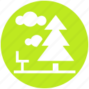 cloud, forest, nature, park, pine, summer, tree