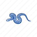 animal, death adder snake, elapid snake, reptile, serpent, snake