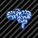 animal, campbell's milk snake, pueblan mil snake, reptile, snake, vertebrate